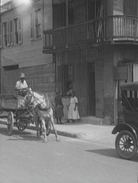 Mule and Automobile Share City Street