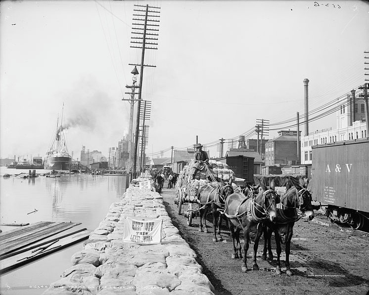 Mules on the Levee