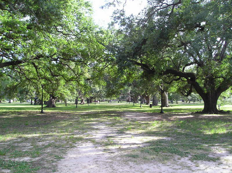 The Foucher Alley of Oaks