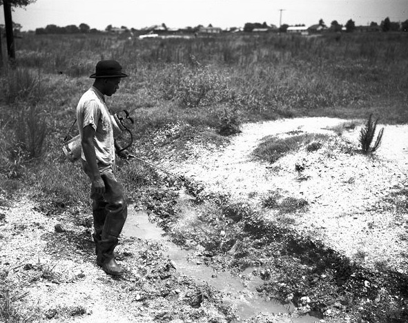WPA Workers Kill Malarial Mosquitoes