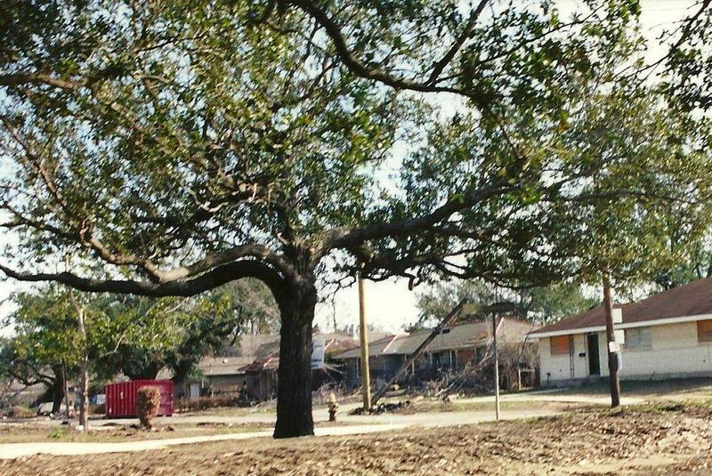 Filmore Gardens neighborhood of Gentilly